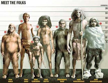 familia hominidos