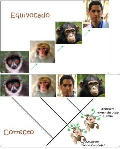 venimosdelmono nuestros primos primates