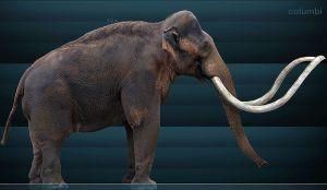 1 Mammuthus_columbi_ mamut fosil