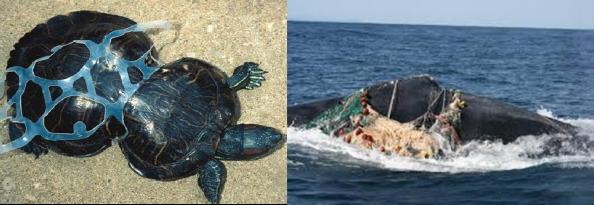 animales marinos enredados plastico