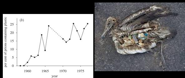 aves plastico estomago muerte estadistica