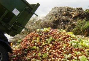 desperdicio alimentos comida