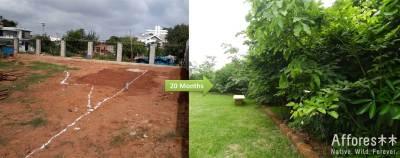 Shubhendu Sharma creando bosques