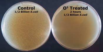 2-hour-treatment-ozone E. coli