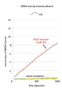 ADH4 en primates etanol