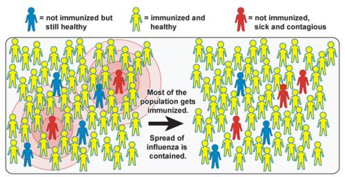 inmunidad de grupo