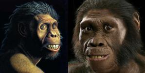 Homo habilis y Australopithecus sediba