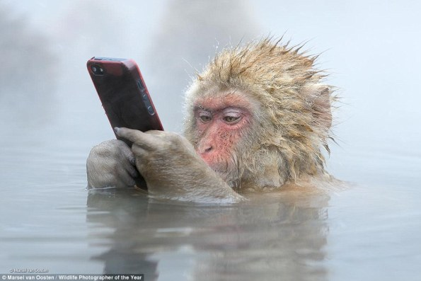 Marsel van Oosten macaco