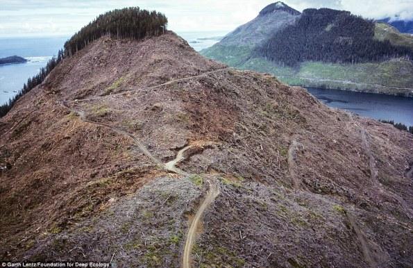 6 Tala de árboles en la isla de Vancouver