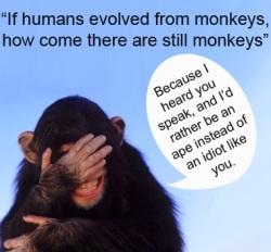 Si hemos evolucionado de los monos, por qué hay todavía monos