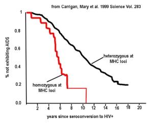 MHCheterozygoteadvantage