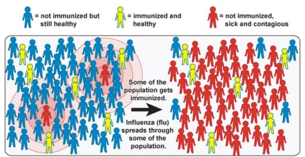 inmunidad-individual 2