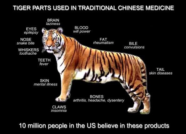 medicina tradicional china medicamento tigre