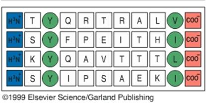 3 HLA polimorfismo clase I peptido antigénico