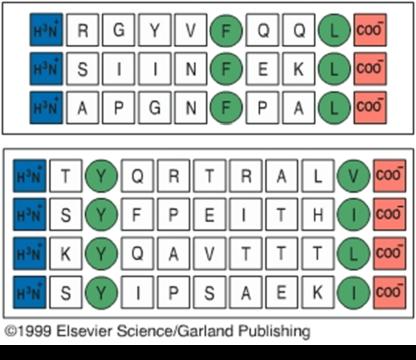 5 HLA polimorfismo clase I peptido antigénico
