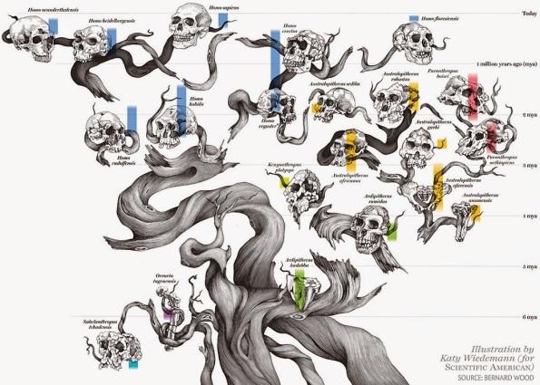 Human tree of life