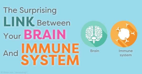link-brain-immune-system-fb