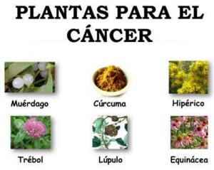 plantas contra el cancer