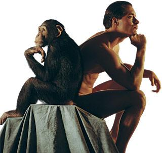 chimpancesyhumanos