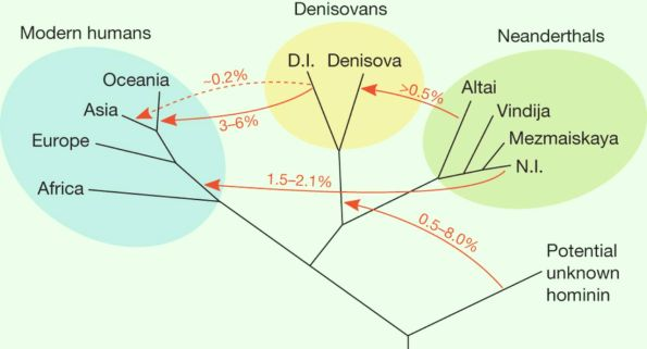 image_1624_2e-neanderthals