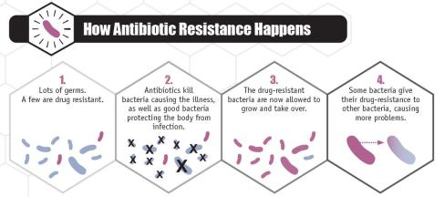 selection-natural-bacteria-antibiotics
