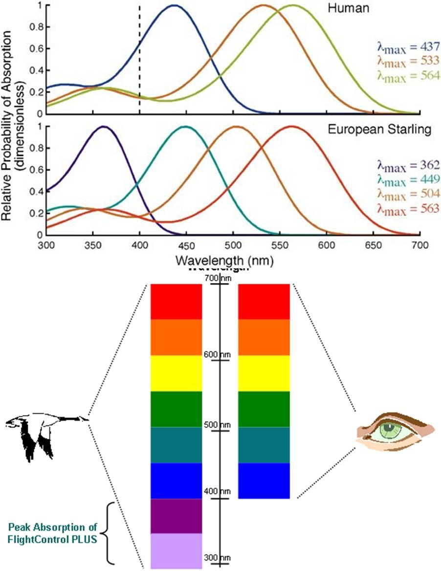 Un par de historias evolutivas sobre el ojo y la visión | La Ciencia ...