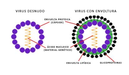 estructuravirus