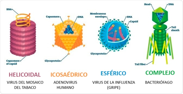 forma-virus